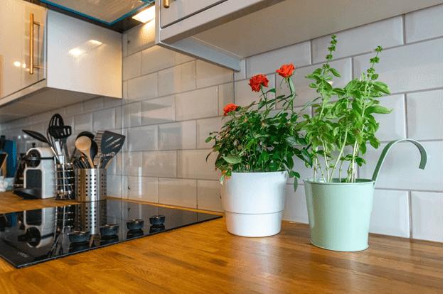 Best Indoor Plants That Will Enhance Kitchen Décor